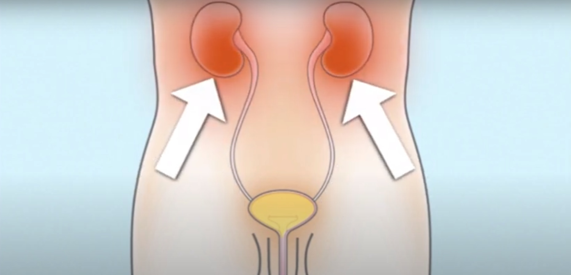 How the bladder works for boys